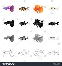 different types aquarium marine fish guppies stock vector