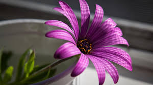 flowers coupon 1 800 flowers coupon wallpaper