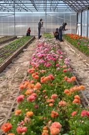 farm fresh flowers 63 best farm fresh flowers images on fresh flowers