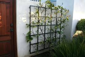 Ideas For Metal Garden Trellis Design Wall Trellis Ideas Best Wall Trellis Ideas On Trellis Garden Wall