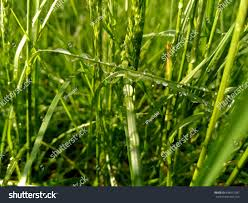 beautiful plants drops dew magic morning fresh pictures stock photo 648047587