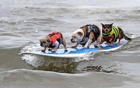 Bench Dog Cookies Dog Friendly California Destinations Sfgate