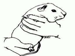 cute pet hamster coloring pages for kids womanmate com