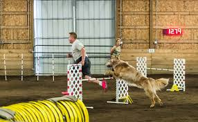 double j ranch australian shepherds 25 gifs of dogs competing in agility american kennel club