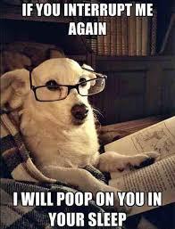 Dog With Glasses Meme - dog reading wearing glasses hostel hunting blog malaysia