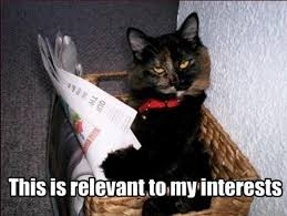 Newspaper Cat Meme - let s talk about stats baby let s talk about gdp ons digital