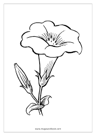 coloring pages trees plants and flowers plants coloring pages 11