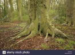 base of a tree trunk stock photo royalty free image 4756073 alamy
