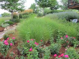 perennial and annual ornamental grasses