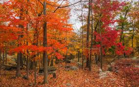 beautiful fall leaves travel leisure