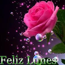imagenes de feliz inicio de semana con rosas linda rosa para desear un feliz lunes pinteres