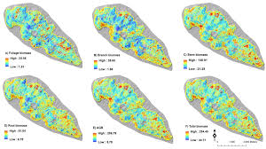forests free full text mapping above and below ground biomass