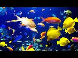 all freshwater aquarium fish species youtube