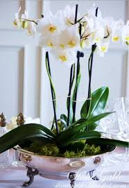 Orchid Centerpieces How To Care For Orchids For The Prettiest Of Blooms