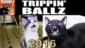 Random Cat Meme - talking kitty cat 45 trippin ballz 2016 youtube