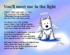 grieving loss of pet loving our pets is part of and losing them eventually is