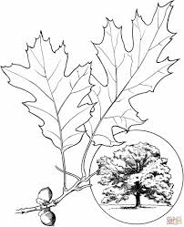 free nature coloring pages nature page for kids printable free coloing oak leaf coloring