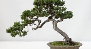 22 cool bonsai tree designs home decor 55503