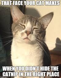 Meme Stoner - stoner cat meme generator imgflip