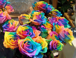 Putting Roses In A Vase Gorgeous Black Rose Rebrn Com