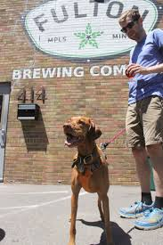 Dog Patio Six Fun Things To Do With Your Dog In The Metro Startribune Com