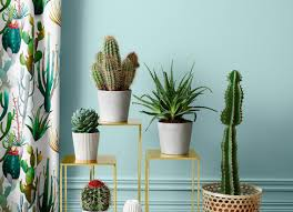 indoor plants that need little light plant low light bathroom plants indoor plants in bathroom
