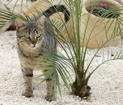 free picture nature cat backyard kitten palm tree soil