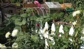 take a tour of our urban garden lavender u0026 fir
