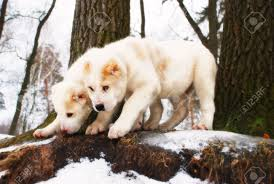 two lovely white fluffy puppies stand near the tree stock photo