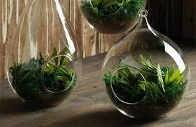 large glass terrarium bowl u2013 outdoor decorations