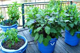 planning for vegetable gardening check these terrace vegetable