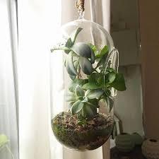 plante verte bureau plante interieur ombre pour plante verte bureau frais 39 best les