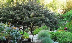 nine problem solving small trees for small spaces grow beautifully
