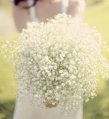 baby s breath bouquet baby s breath bouquet bouquet bouquet