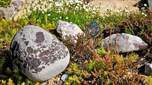 Simple Rock Garden Simple Rock Garden Decoration Ideas 5714 House Decoration Ideas