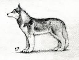 how to sketch a husky step by step pets animals free online