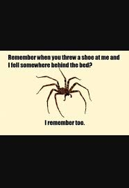 Afraid Of Spiders Meme - if you re afraid of spiders what could i say to convince you to