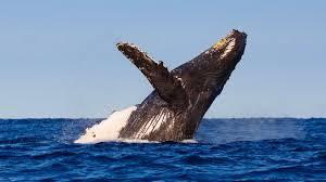 whale san diego zoo animals u0026 plants