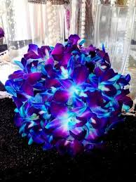 blue and purple orchids electric blue orchids wedding electric blue