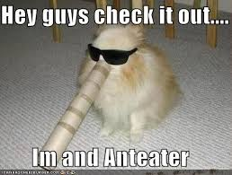 Anteater Meme - anteaters are the goofiest mo ers there are bodybuilding com