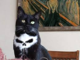 Funny Memes Of Cats - beware of the punisher cat the best memes are here