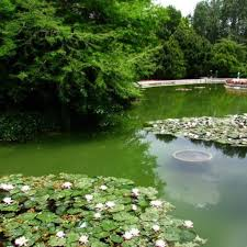 iran birds and flower gardens of isfahan tripadvisor iran birds and flower gardens of isfahan