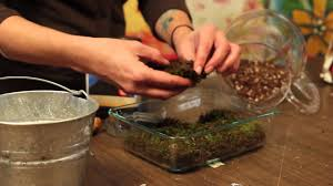 creative moss terrarium at home with p allen smith youtube