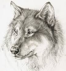 79 best wolf sketch images on pinterest anime wolf drawing draw