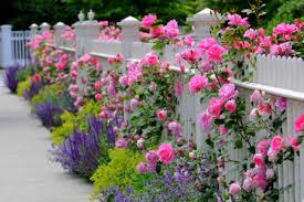 cottage style garden ideas gardening ideas