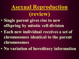 chapter 23 meiosis and sexual reproduction asexual reproduction
