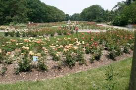 Family Garden Chinese Columbus Ohio 5 Places To Find Peace And Quiet In Columbus Ohio