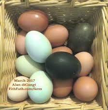 fith fath farm blog archive chicken eggs come in different