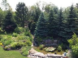 Rock Garden Tour by Among The Gardens A Visual Tour Of Some Tweed Area Oases