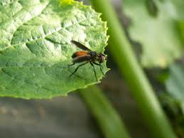 Small Red Bugs On Patio by 6 Ways To Get Rid Of Squash Bugs In Your Garden Naturally The
